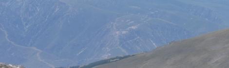 Chamois at Sierra Nevada Peak