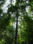 Penang national park treetop