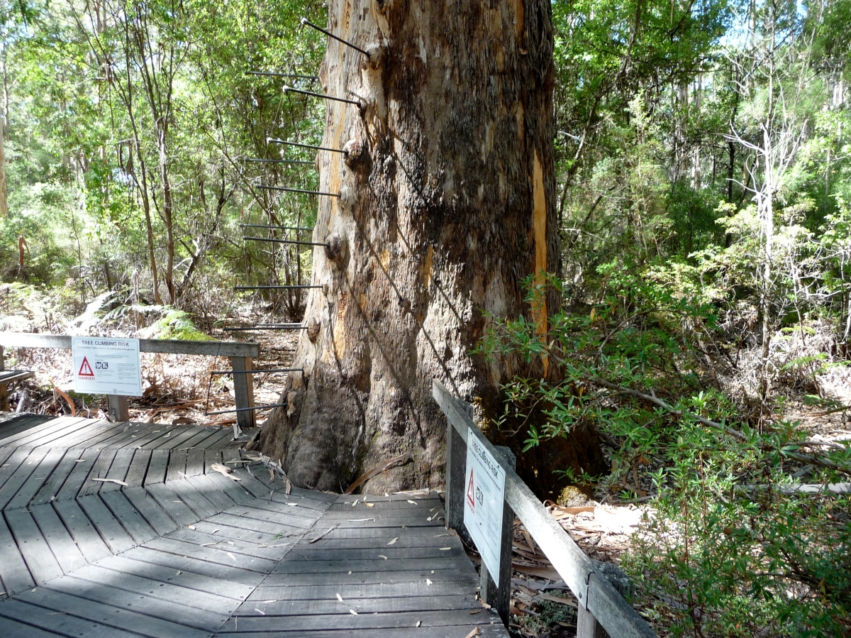 Gloucester tree climbing pegs