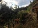 Ravine near start of trail